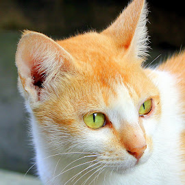 by Kanchan D - Animals - Cats Portraits