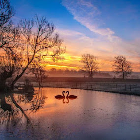 Frosty sunrise and swans  by Ian Flear - Digital Art Places ( relax, tranquil, relaxing, tranquility,  )