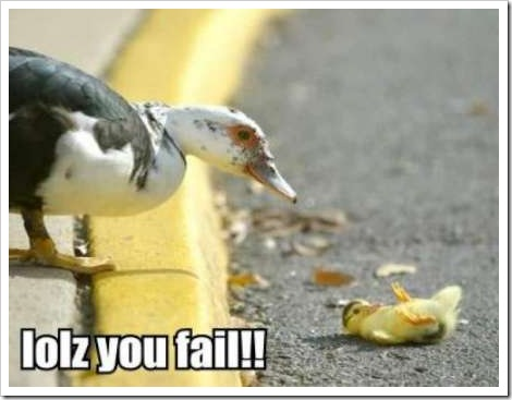 FAIL - Funny Duck Picture.