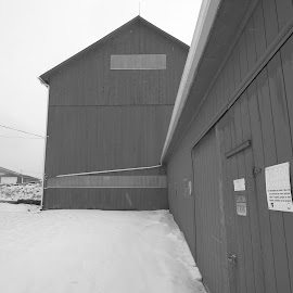 Barn by Marcia Taylor - Novices Only Landscapes (  )
