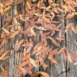 After the wind by Waratah Nicholls - Abstract Patterns ( old, patterns, wooden, leaves, golden )
