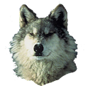 Wolf Sticker icon