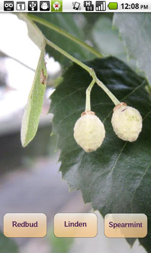 Foraging Flashcards Fruits