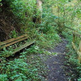 by Shelley Mcconnell - Nature Up Close Leaves & Grasses ( benches,  )