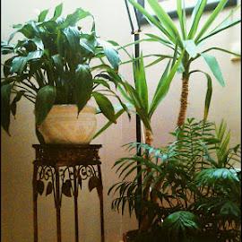 by Jovana Perovanović - Novices Only Flowers & Plants