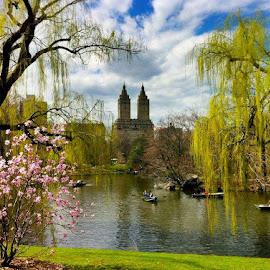 Central Park, NYC by Tyrell Heaton - City,  Street & Park  City Parks ( central park )