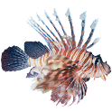 Lionfish Sticker icon
