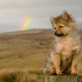 hugo my wee bit of gold at the end of a rainbow  by Michael Sweeney - Animals - Dogs Puppies