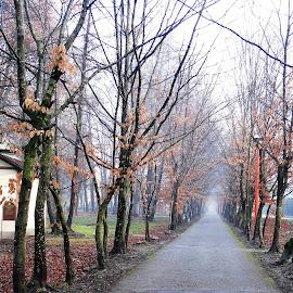 morning landscape .. by Dubravka Penzić - City,  Street & Park  City Parks (  )