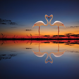 Our love will stay forever by George Leontaras - Digital Art Animals ( reflection, hellas, grass, greece, fine art, sea, birds, manipulation, love, volos, blue, digital art, glart, night, photoshop )