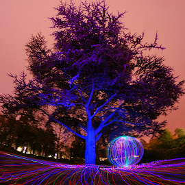 Vivid tree in the rain, no editing by James de Luna - Abstract Light Painting