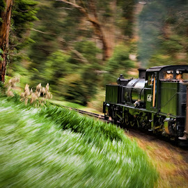 Puffing Billy by Aaron Stott - Transportation Trains