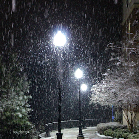A Snowy Path by Brianne Cronenwett - Landscapes Weather ( lamps, snowfall, snow, college, lamp, night, lamp post, lamp posts, sidewalk, campus, , relax, tranquil, relaxing, tranquility )