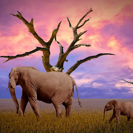 Mother and Child by Rickus Olivier - Digital Art Animals ( clouds, calm, nobody, non-urban scene, tranquil scene, farmland, high noon, landscape, sunlight, sun, elephants, field, midday, barley, nature, mother and child, simply, summer, rural scene, fields )