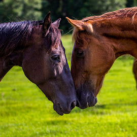 Duel by James Culbreth - Animals Horses ( race horse, leesburg georgia, horses, duel, mother protects baby )