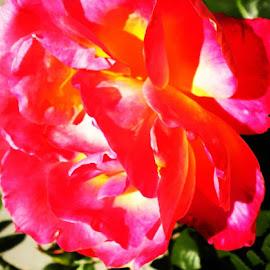 by Karen Phil Griggs - Abstract Macro ( macro, flower )