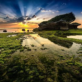 Green carpet by Karl Nakasone - Landscapes Sunsets & Sunrises