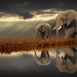 When Light Shows the Way by Jennifer Woodward - Digital Art Animals ( water, elephants, animals, nature, wildlife, reflections )