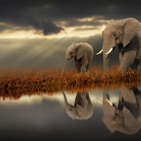 When Light Shows the Way by Jennifer Woodward - Digital Art Animals ( water, elephants, animals, nature, wildlife, reflections )