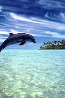 Screenshot of Dolphin Sea Live Wallpapers HD