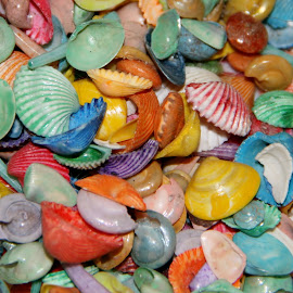 colorful by Debbie Theobald - Abstract Patterns ( abstract, shells, colorful, textures, art,  )