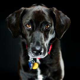 Lucy by Larry Glick - Animals - Dogs Portraits