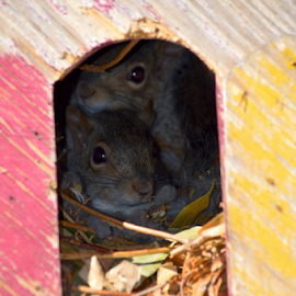A Cozy Home by Rob Kovacs - Novices Only Wildlife