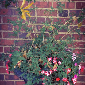 Fall Planter by Donald Henninger - Novices Only Objects & Still Life ( arrangement, doorway, fall colors, window, falling leaf, pile, falling, house, street scene, flowers, garden )