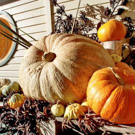 Pumpkins  by Winkie Chau - Food & Drink Fruits & Vegetables ( fruit, food, pumpkins, vegetables, thanksgiving,  )