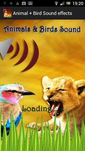 Animal + Bird Sound Effects
