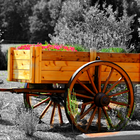 The Flower Cart by Darlene Lankford Honeycutt - Artistic Objects Other Objects ( carts, selective color, deez, dl honeycutt, landscape, flowers, wagons,  )