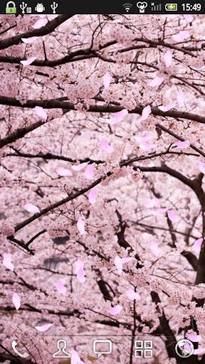 樱花 动态壁纸