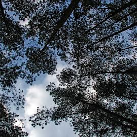 Jayagiri by Yoga Anugrah Putra - Landscapes Forests