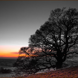 Last light on Farthing Common by Andy Smith - Landscapes Prairies, Meadows & Fields ( sunset, selective-colour, kent hills, evening )