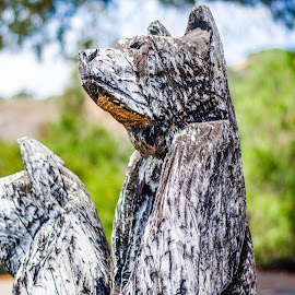 Two bears by Angelo Perrino - Buildings & Architecture Statues & Monuments
