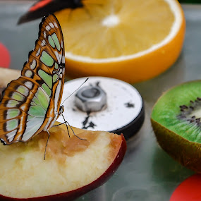 Butterflies are beautiful. by Jean Bogdan Dumitru - Animals Insects & Spiders (  )