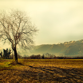 Tree by Luigi Esposito - Landscapes Prairies, Meadows & Fields ( grassland, mountains, tree, prairies )