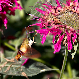 by Todd Yonkers - Nature Up Close Other Natural Objects ( nature, buzz, beautiful, bee bird, flowers )
