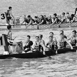 Dragon Boats by Koh Chip Whye - Sports & Fitness Watersports (  )