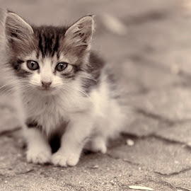 by Arslan Uçar - Animals - Cats Kittens