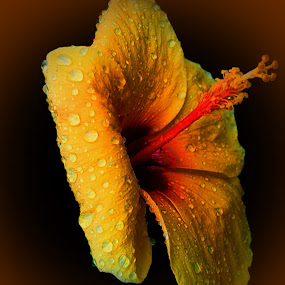 just after rain by Michelle Meenawong - Nature Up Close Flowers ( nature, yellow, flower, rain drop )