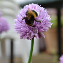 Bee Saved - UK