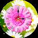 Daisy Clock Live Wallpaper Icon