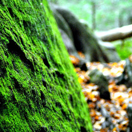 Not a Rolling Stone by Charles Shope - Nature Up Close Rock & Stone ( natural light, nature, color, green, moss, nature up close, stone, rock, hocking hills, leaves )