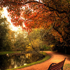 Peaceful by Ian Taylor - City,  Street & Park  City Parks ( uk, bench, park, autumn, fall, sedgefield, pond, hardwick )