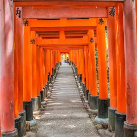Torii Tunnel by Sue Matsunaga - Buildings & Architecture Statues & Monuments