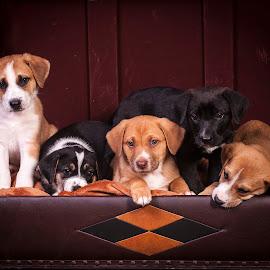 Puppy Love by Myra Brizendine Wilson - Animals - Dogs Puppies ( cute puppies, dogs, foster, gcspca, charity, greater charlotte spca, greater charlotte spca charity, canine, puppies, foster dogs, cute puppy, foster dog, pet, pets, puppy, dog, gcspca foster dog photo shoot,  )
