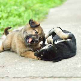 I'll bite u... by Sandeep Nagar - Animals - Dogs Puppies ( puppies, brown, cute, dog, black, baby, young, animal )