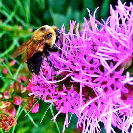 Bee with iPhone by Tyrell Heaton - Instagram & Mobile iPhone ( purple, bee, insect, iphone, flower )