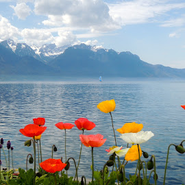 Montreux by Bogdan Penkovsky - Landscapes Waterscapes ( mountains, vivid, switzerland, lake, flowers )